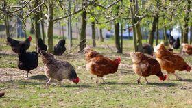 Viele Verbraucher wünschen sich eine artgerechte Tierhaltung
