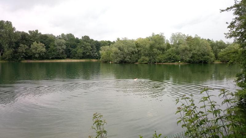 Schwimmer im Erlensee bei Bickenbach