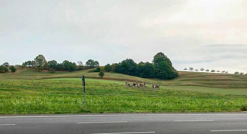 Freie Landschaft bei Mörlenbach, die zu Gewerbegebiet werden soll